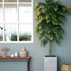느티나무 좋아하면 실내에선 마운틴나무