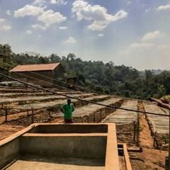 에티오피아 리무 볼렌소 내추럴 (Ethiopia Limu Wolenso)