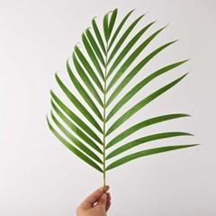 아레카 Leaf (생화) + 화병 Set