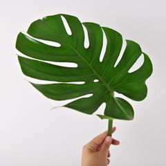 몬스테라 Leaf (생화) + 화병 set