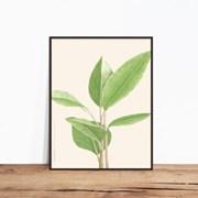 banyan tree01