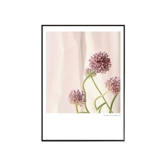에포크 - 꽃시리즈 No.2 50x70