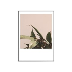 에포크 - 검트리 (The gum tree) 50x70
