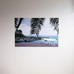필름사진 포스터 야자나무잎+바다