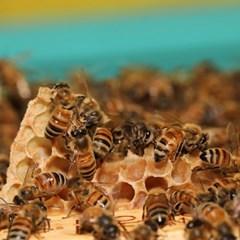 (중구) 도시양봉 입문과정. 서울 호텔에서 꿀벌 키워보기