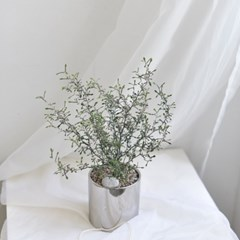 예쁜화분 코로키아 집들이선물 인테리어 화분 (중형)