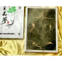[2뿌리 더 추가증정] 직접기른 5년근 산양산삼 5+1뿌리