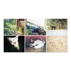 [ 동네방네 ] 고양이 필름 사진 엽서 #01