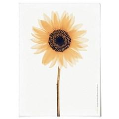 패브릭 포스터 F234 꽃 식물 인테리어 액자 해바라기 B