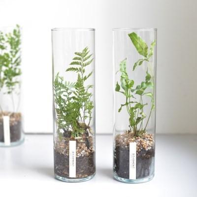 식물표본 테라리움 Botanic Collection #00