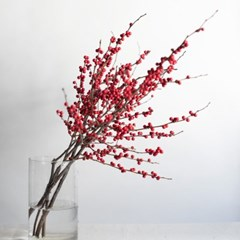 낙산홍 인테리어 생화 소품