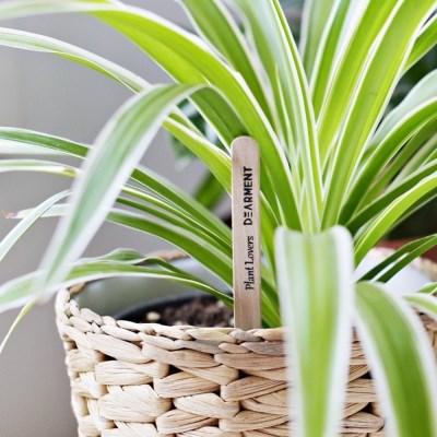 식물 화분 물주기 테스트 막대 5개