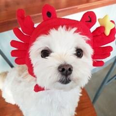 [갓샵 핵인싸템 강아지 꽃게모자] 귀여운 코스프레 댕댕이햇