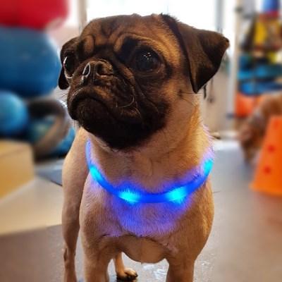 견심 애견 야간목줄 LED목줄 안전목줄 전견종 착용가능 블루
