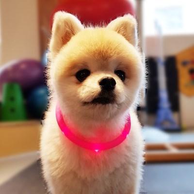 견심 애견 야간목줄 LED목줄 안전목줄 전견종 착용가능 핑크