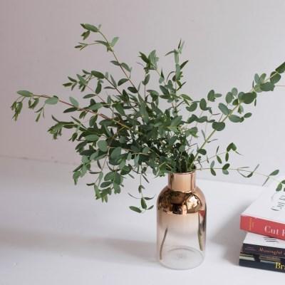 파블로 유칼립투스 공기정화 식물 인테리어