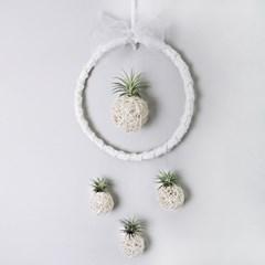 [리브인리프] 틸란모빌 공기정화식물