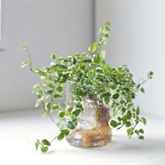 푸밀라 비커 식물 수경 인테리어 소품
