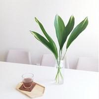 수경재배 생화 엽란 2p/5p 부쉬세트