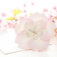 디원 연분홍 벚꽃잎 입체카드 (YD20)