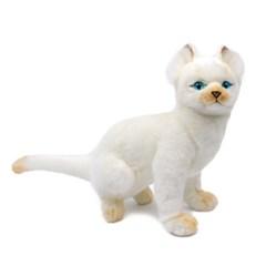 3793-파란눈 아기고양이인형 26cm.L_(1301536)