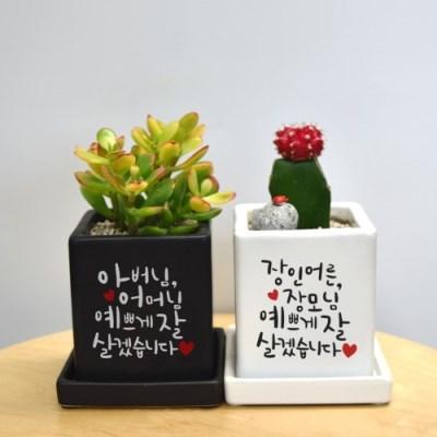 상견례선물 no.1  캘리그라피 컬러 미니화분 감동메세지를 담아♥