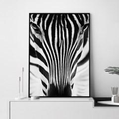 얼룩말 앞모습 동물 포스터 인테리어 그림 액자