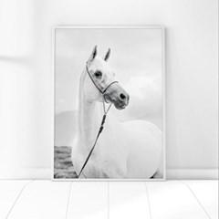 백마 동물 포스터 인테리어 그림 포스터
