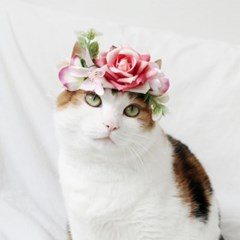 고양이 강아지 핑크 로즈 화관 꽃 머리띠 옷 모자 Miyopet 미요펫