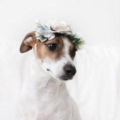 고양이 강아지 화이트 로즈 화관 꽃 머리띠 옷 모자 Miyopet 미요펫