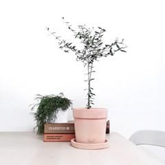 햇살좋은날- 올리브나무 생화 중품