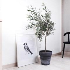 atelier 올리브나무 생화 중대형
