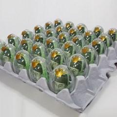 계란한판이벤트DIY세트