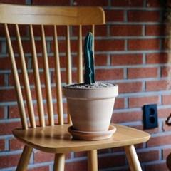 다육식물 용신목 선인장