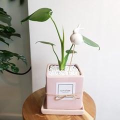 러블리한 공기정화 몬스테라 핑크화분