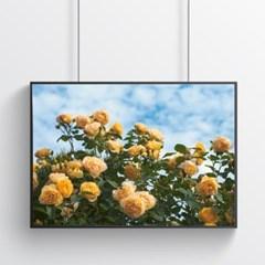 여름 장미 꽃포스터