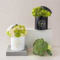 브로콜리 스칸디아 모스 실내공기정화식물[세트상품][전국택배]