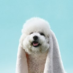 [프랭킷] KC인증 강아지수건 펫타올 코지타올