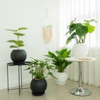 플라랜드 공기정화식물 4종 FRP원통형 블랙,화이트 인테리어화분