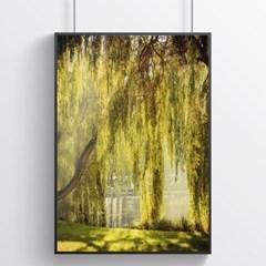 아침산책 버드나무 포스터