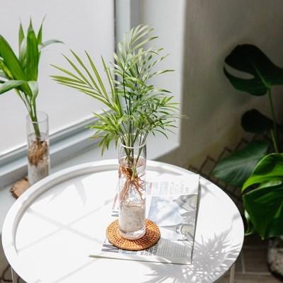 테이블야자 수경재배 세트