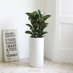 [공기정화식물] 인도고무나무 스페셜_심플화이트(소)