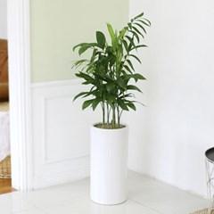 [공기정화식물] 세이브릿지 스페셜_심플화이트(소)