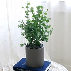 [테이블-공기정화식물] 유칼립투스 심플원형(M)