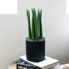 [테이블-공기정화식물] 스투키 심플원형(M)