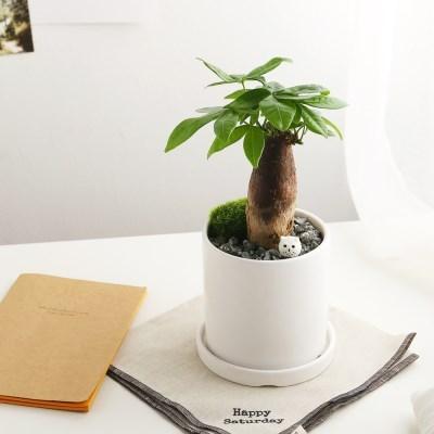 소소한잡화점 공기정화식물_파키라+피규어