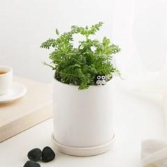 모기퇴치식물_피나타 라벤더+피규어