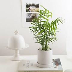 공기정화식물_테이블야자+피규어