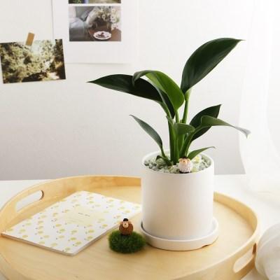 소소한잡화점 공기정화식물_콩고+피규어