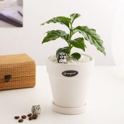 소소한잡화점 공기정화식물_커피나무+피규어